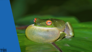 Bloated frog reflects bloated language